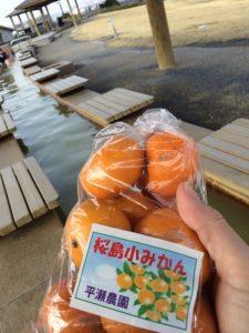 Sakurajima Orange