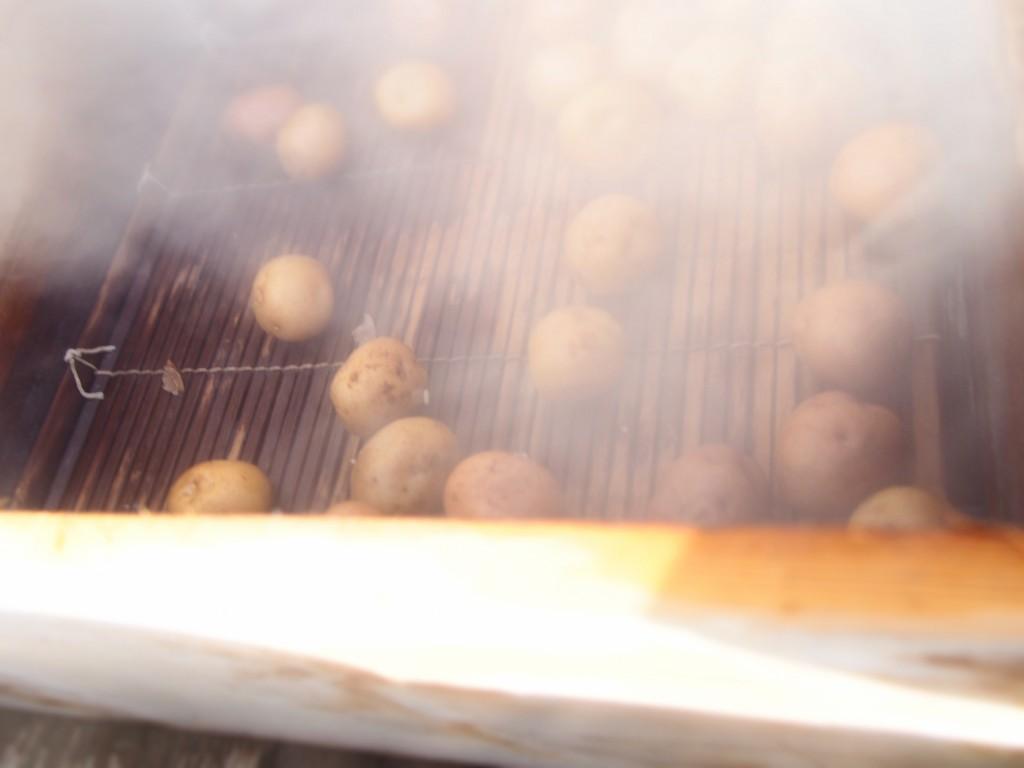 砂湯里のジャガイモ
