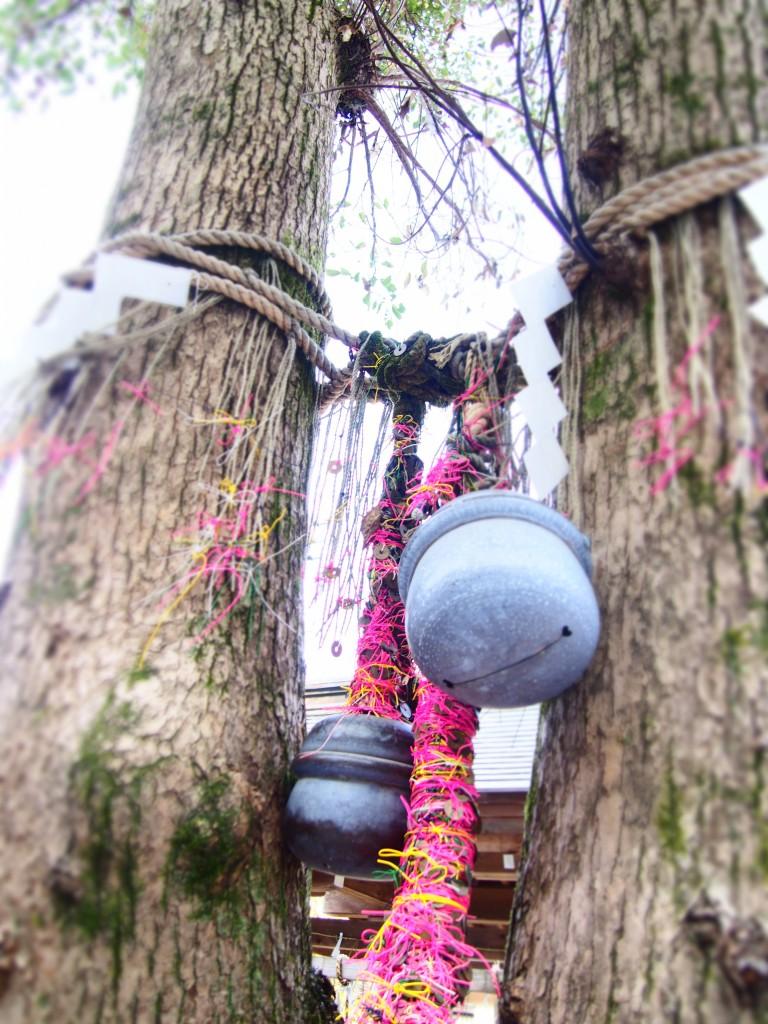 妙見神社の夫婦クスノキ