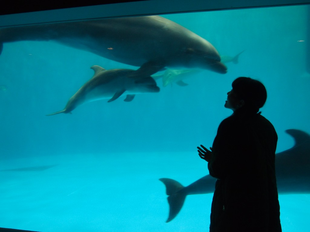 Dolphin Kagoshima Aquarium Baby