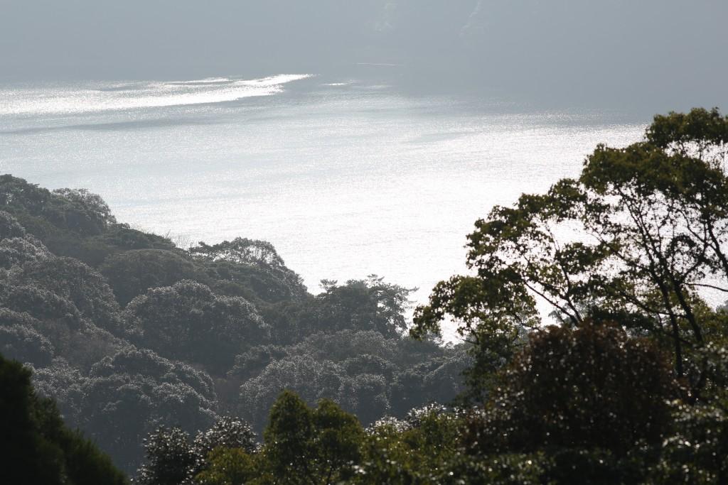 霧島東神社の御池