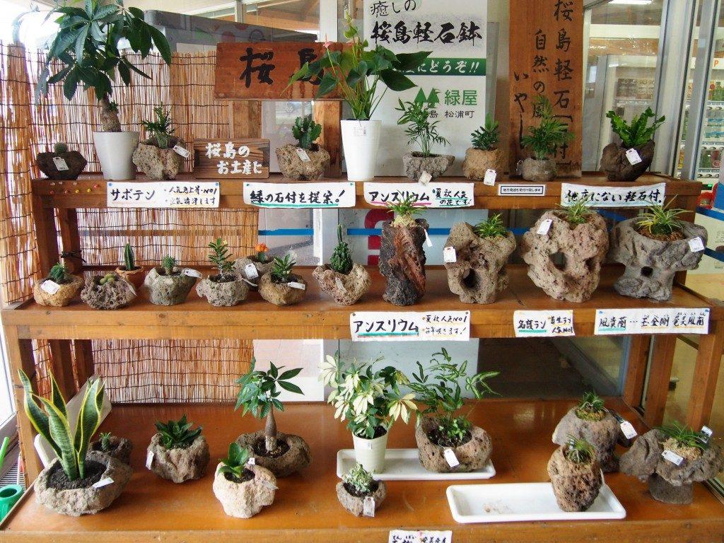 溶岩の鉢植え
