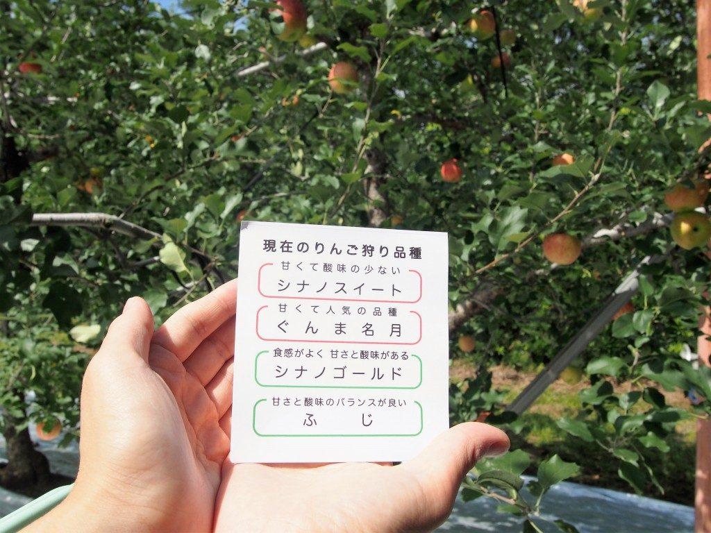ikoma plateau apple park