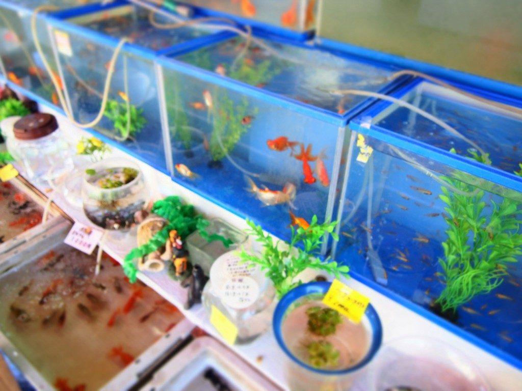 goldfish of tree market