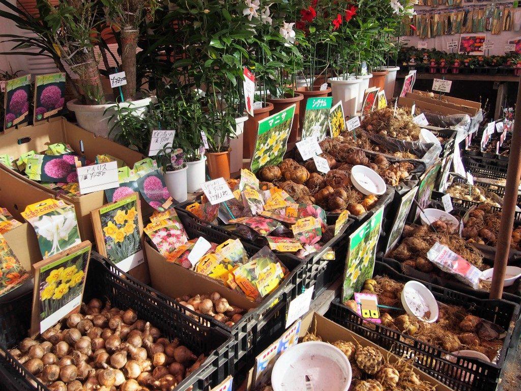flower bulbs of tree market