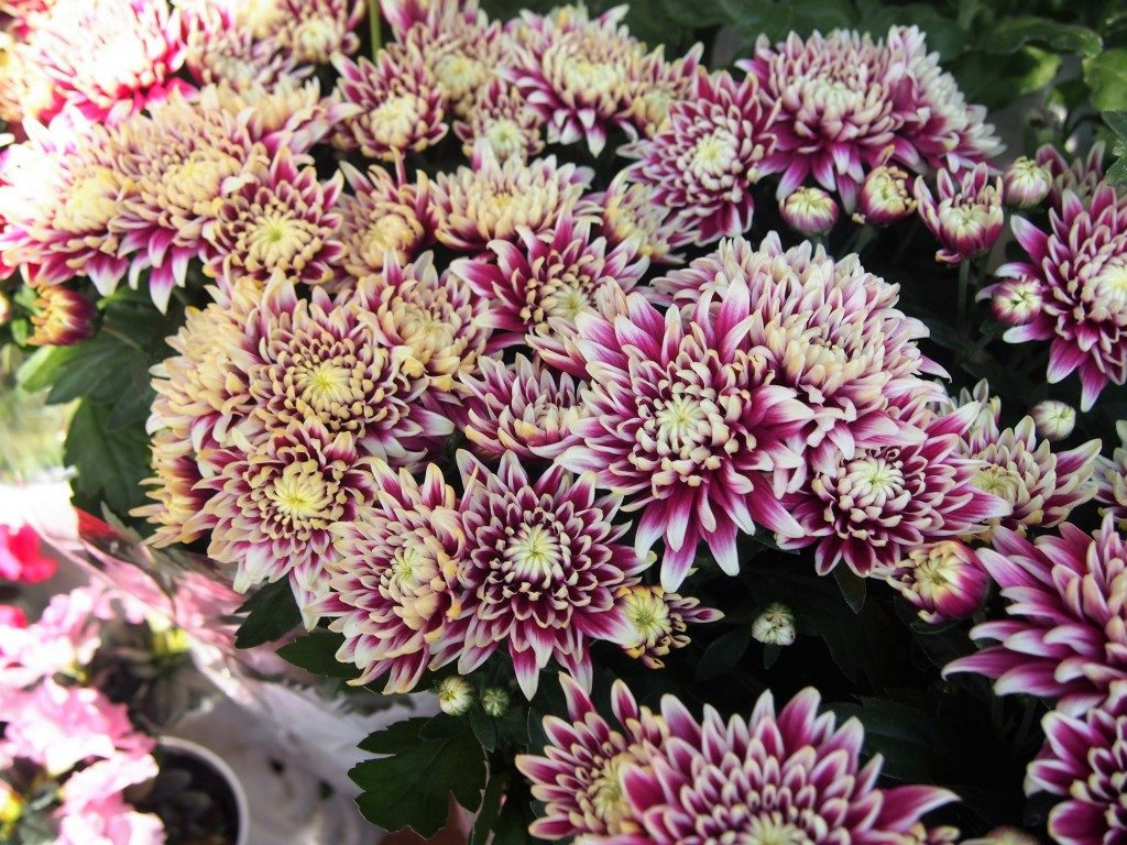 flowers of tree market