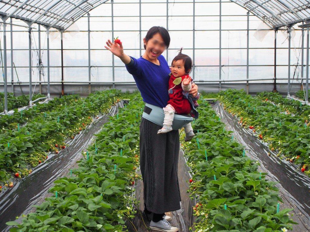 イチゴ狩りを楽しむ母と娘