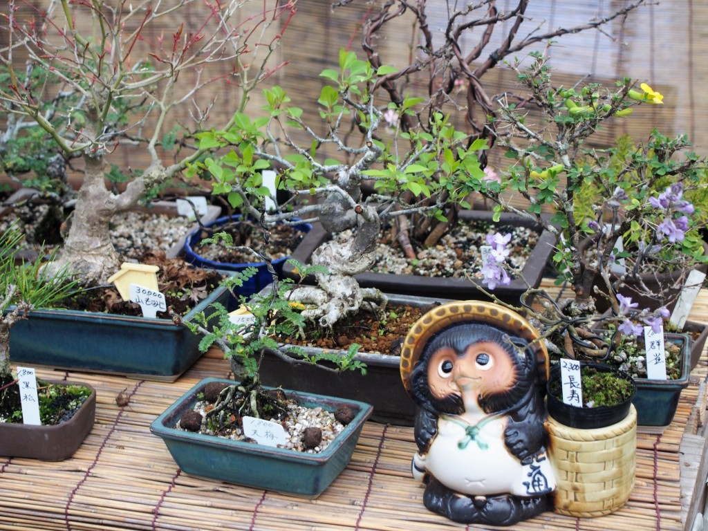 春の木市の盆栽