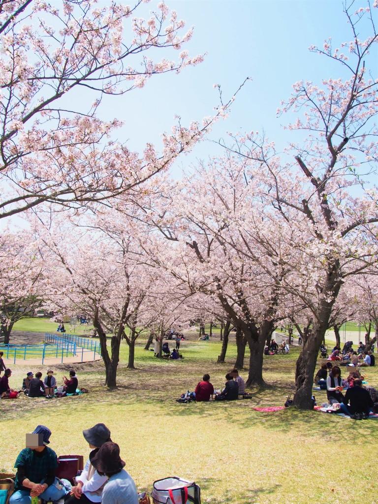 鹿児島県立吉野公園のお花見