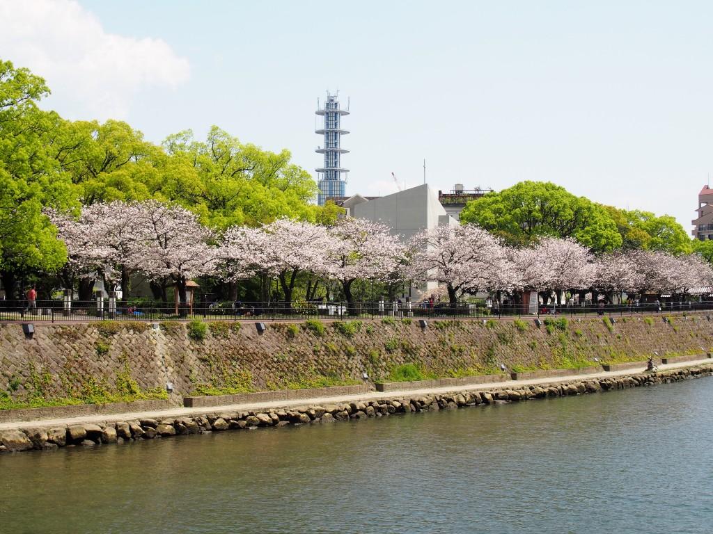 甲突川の桜並木