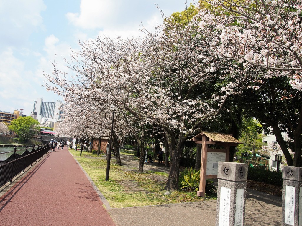 甲突川の桜
