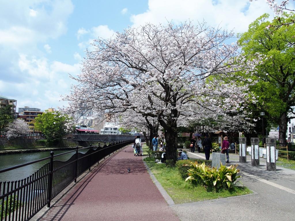 春の甲突川