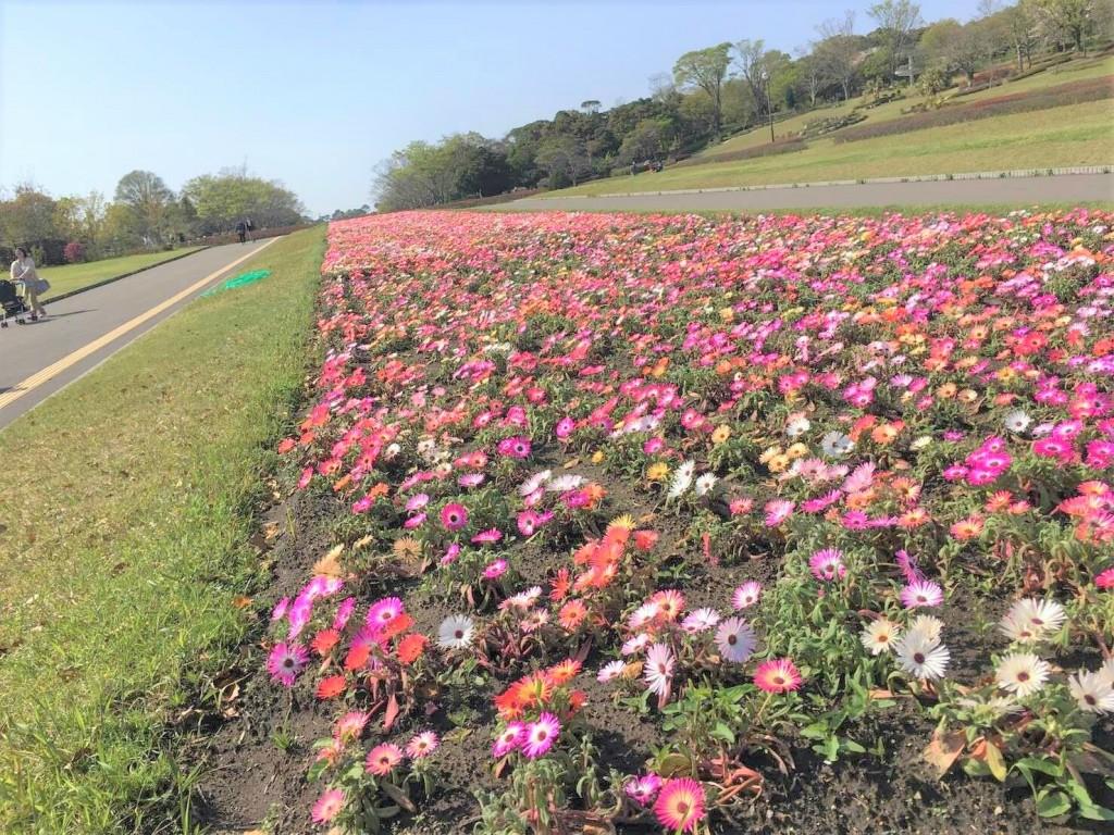 鹿児島県立吉野公園の花