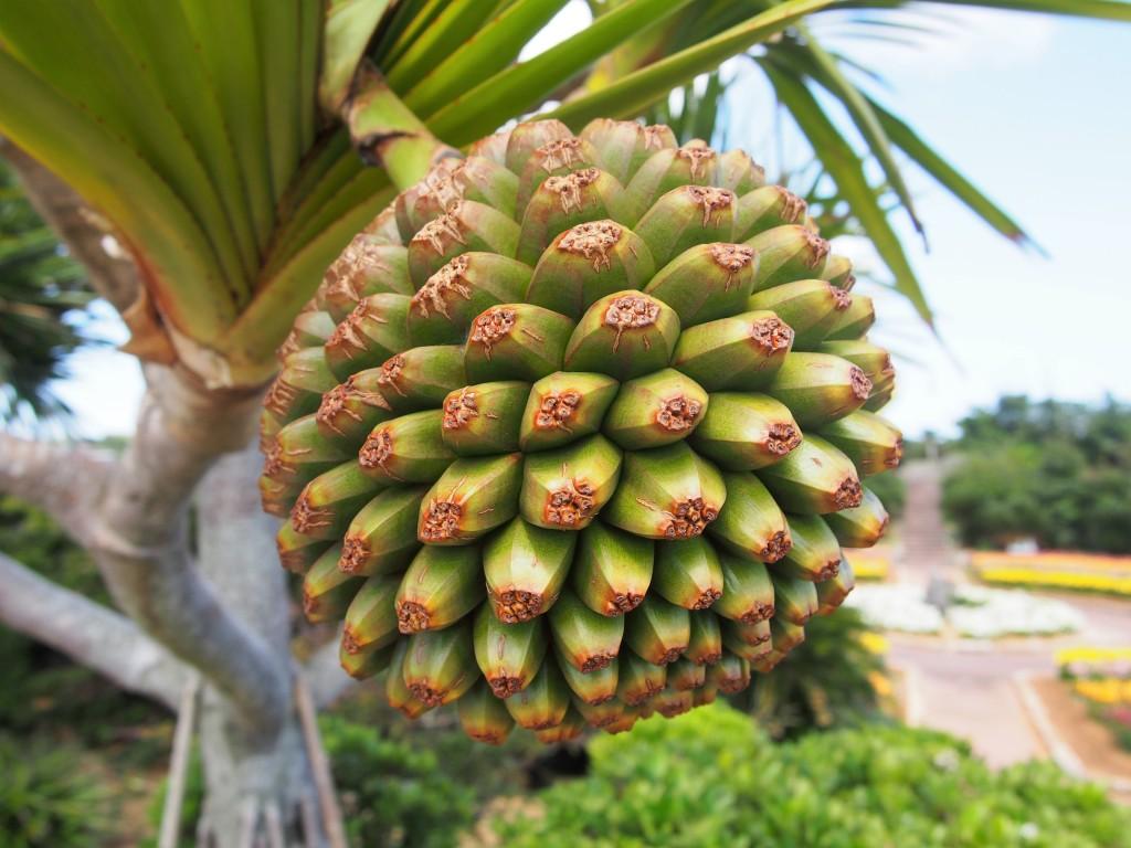笠石海浜公園の植物