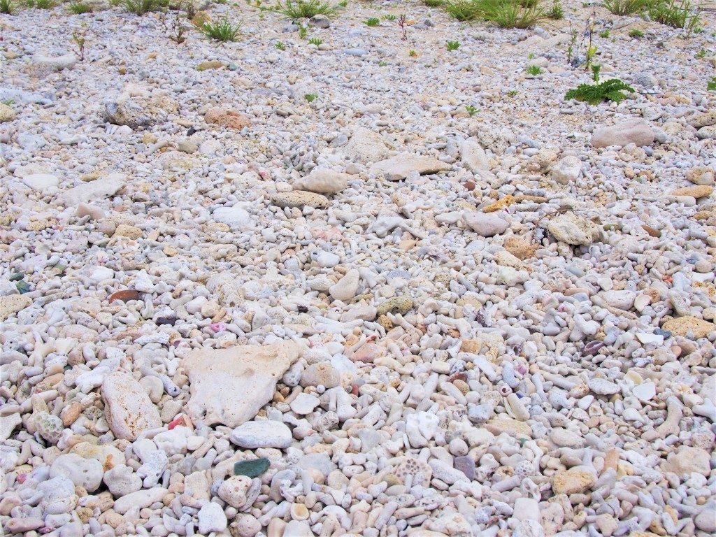 ビーチロックのサンゴのカケラ