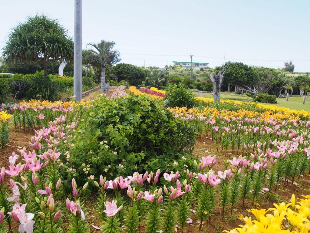 笠石海浜公園のエラブユリ