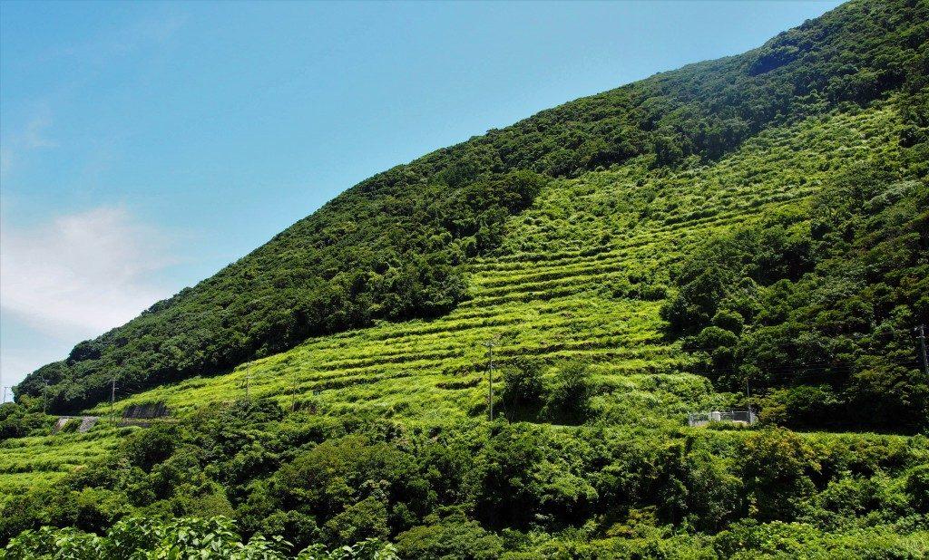谷山展望所から見た段々畑