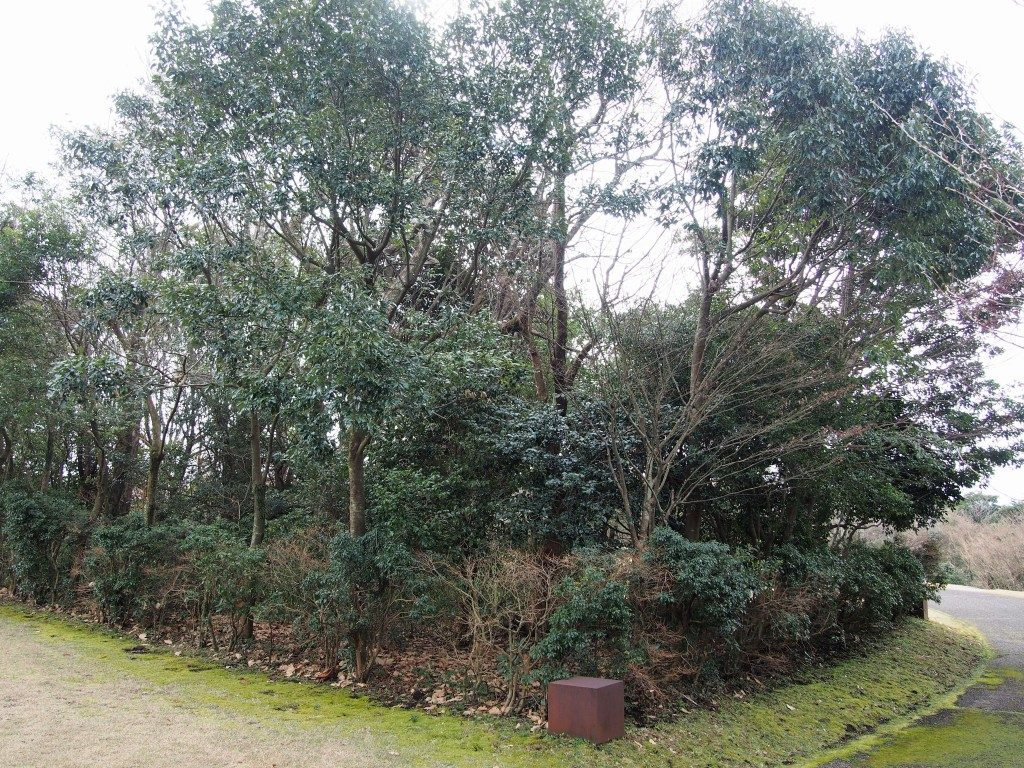 4個の鉄に囲まれた優雅な木々(若林奮)