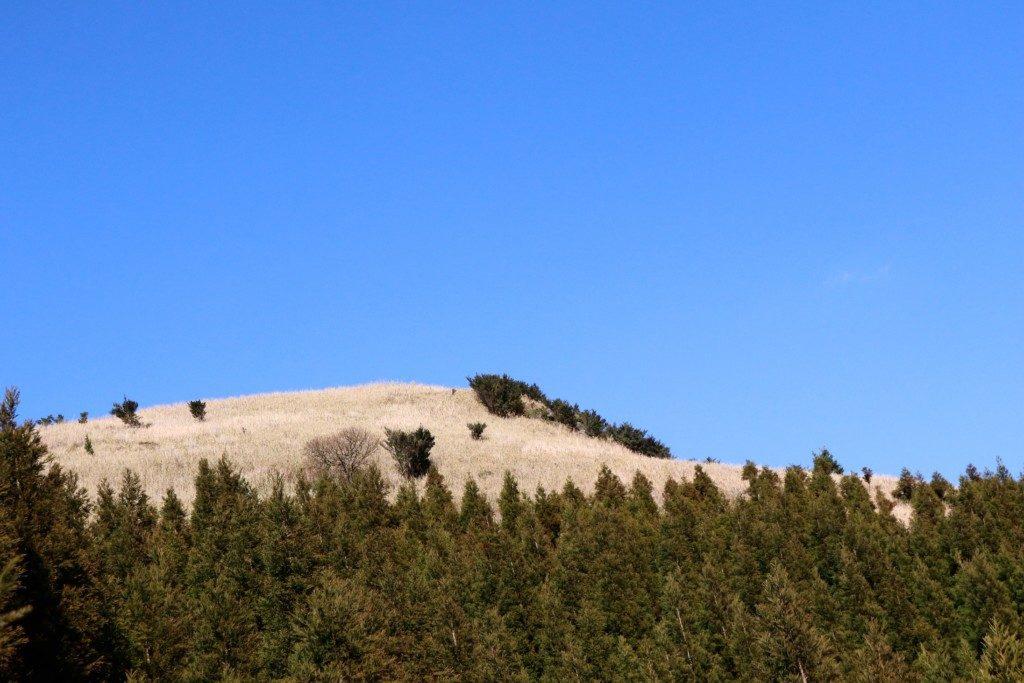 狐ヶ丘高原の山頂