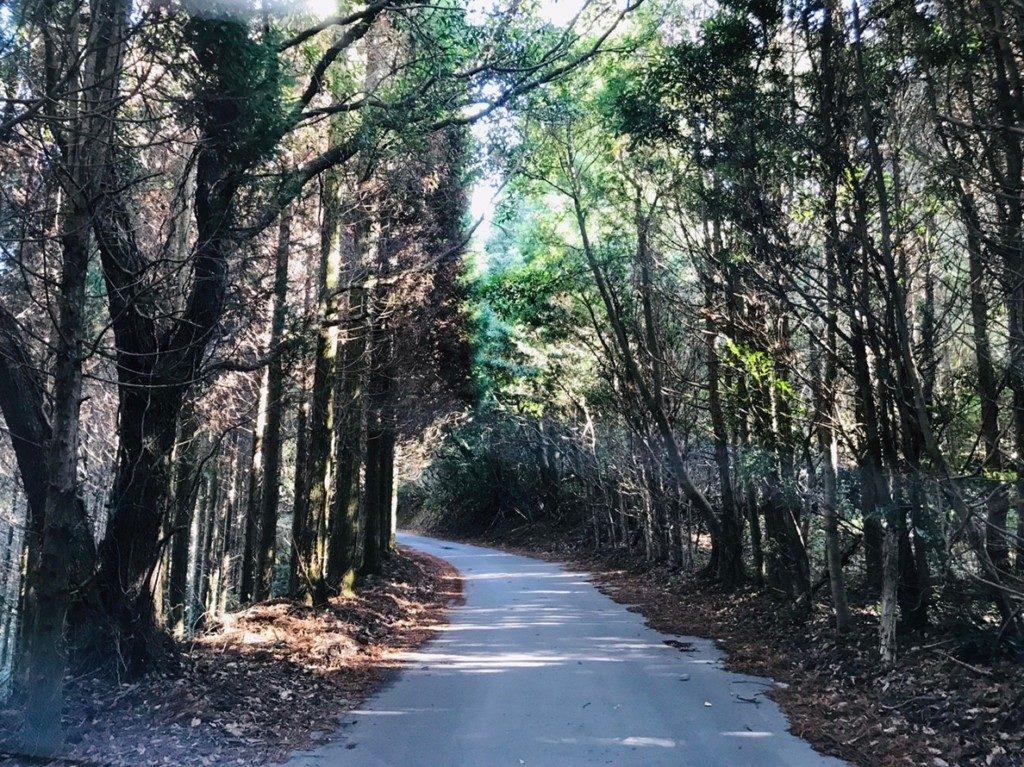 狐ヶ丘高原への道