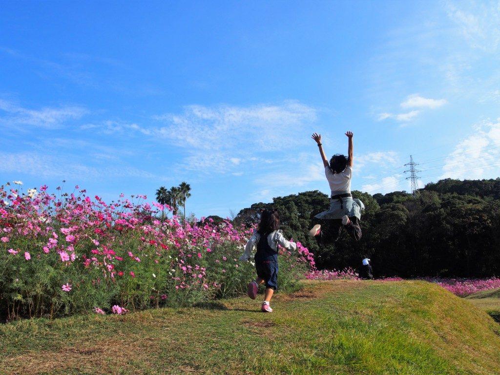 慈眼寺公園のコスモス園