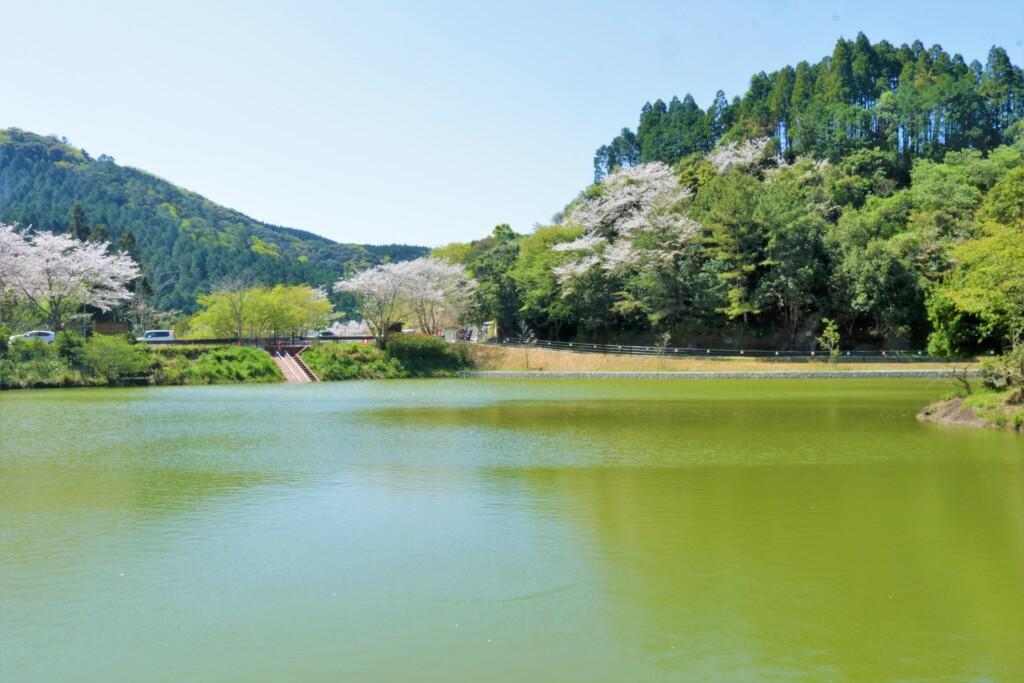 観音ヶ池公園の桜