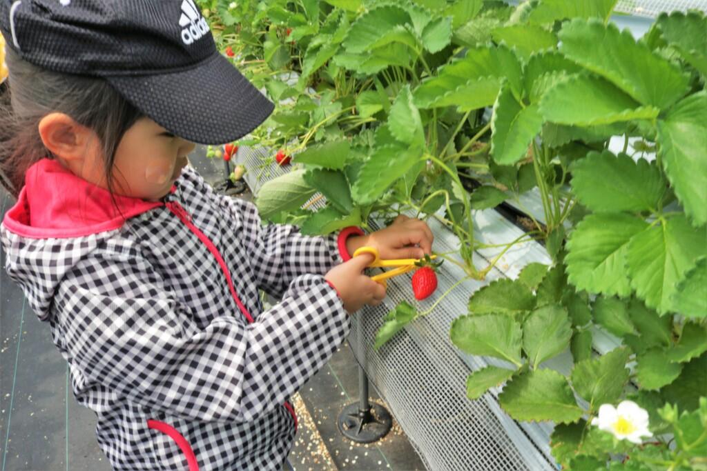 農園ガーデン空のイチゴ狩り